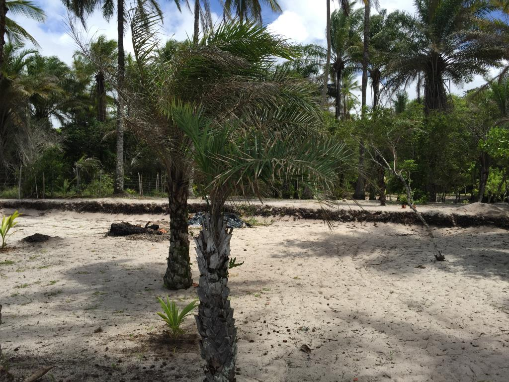 Beautiful Lot Near Boca Da Barra 10