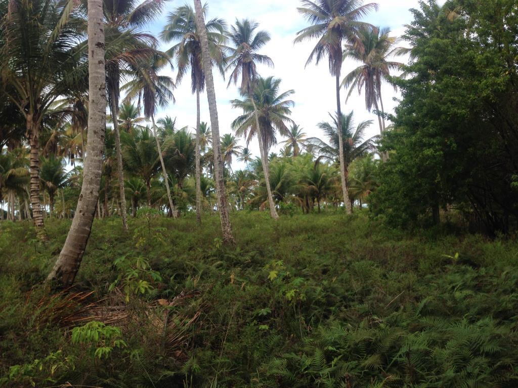 Ótimo Terreno Na Quinta Praia  7