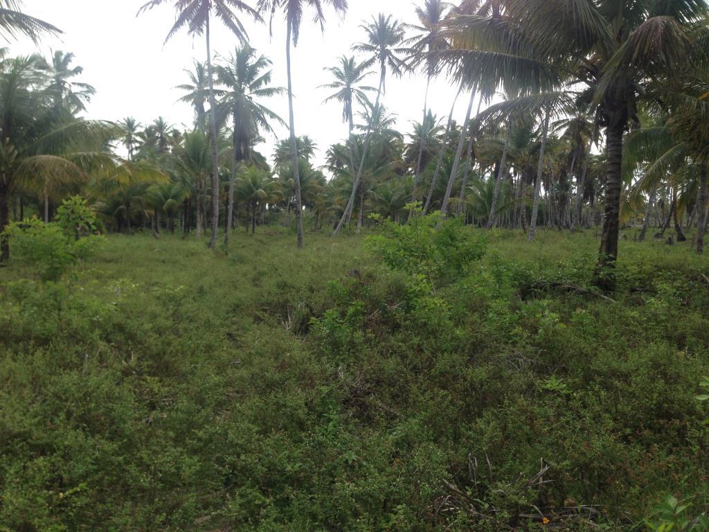 Ótimo Terreno Na Quinta Praia  10