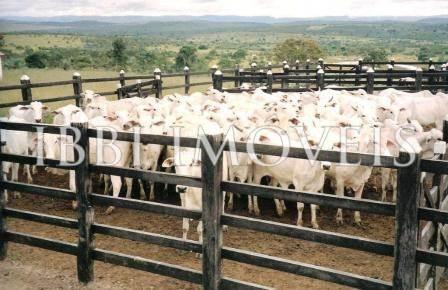 Excelente Fazenda De Gado Com 663Hectares A Apenas 280 Km De Salvador 1