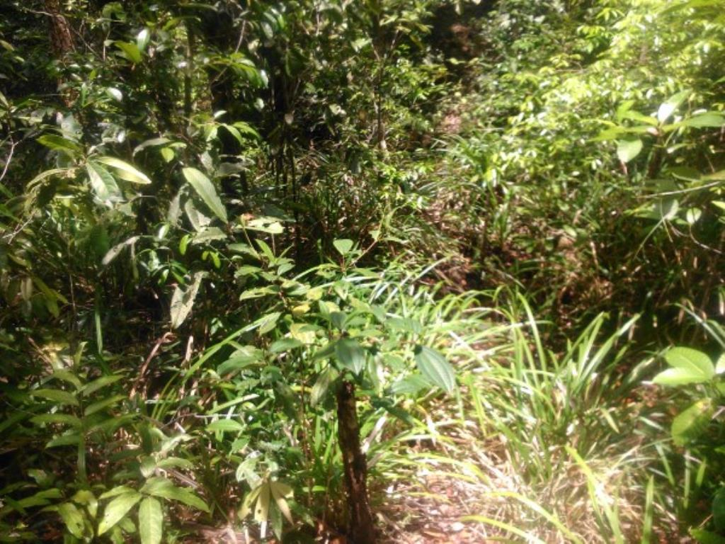 Site Well Located With Access To Pitinga Beach Club Med / Land View 10