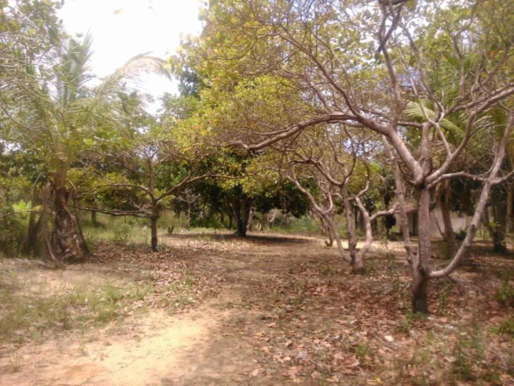 Site Well Located With Access To Pitinga Beach Club Med / Land View 3