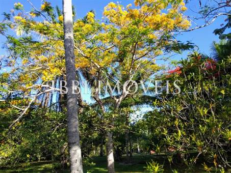 Land 17.600M2 With Sea View 13