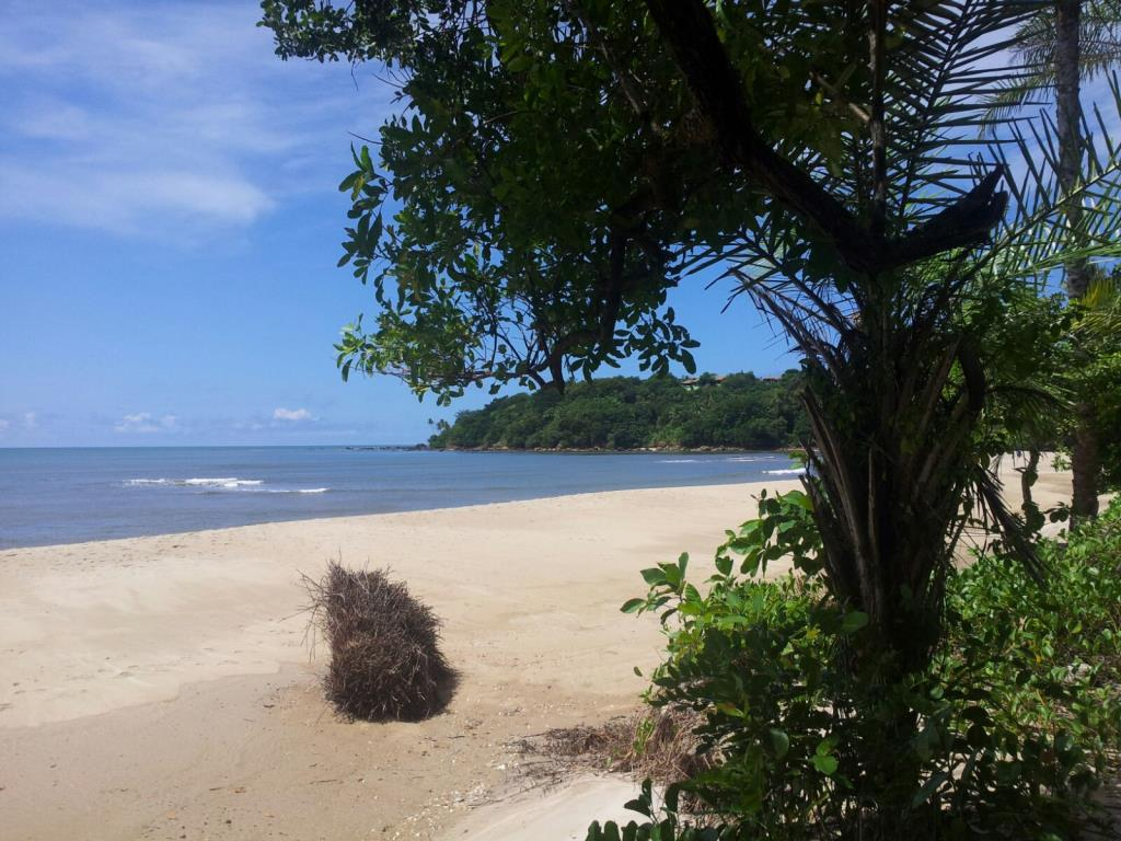 Beautiful beachfront land with an excellent location near to Velha Boipeba 9