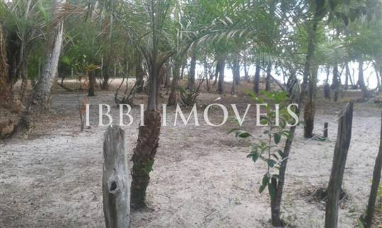 Beautiful beachfront land with an excellent location near to Velha Boipeba 5
