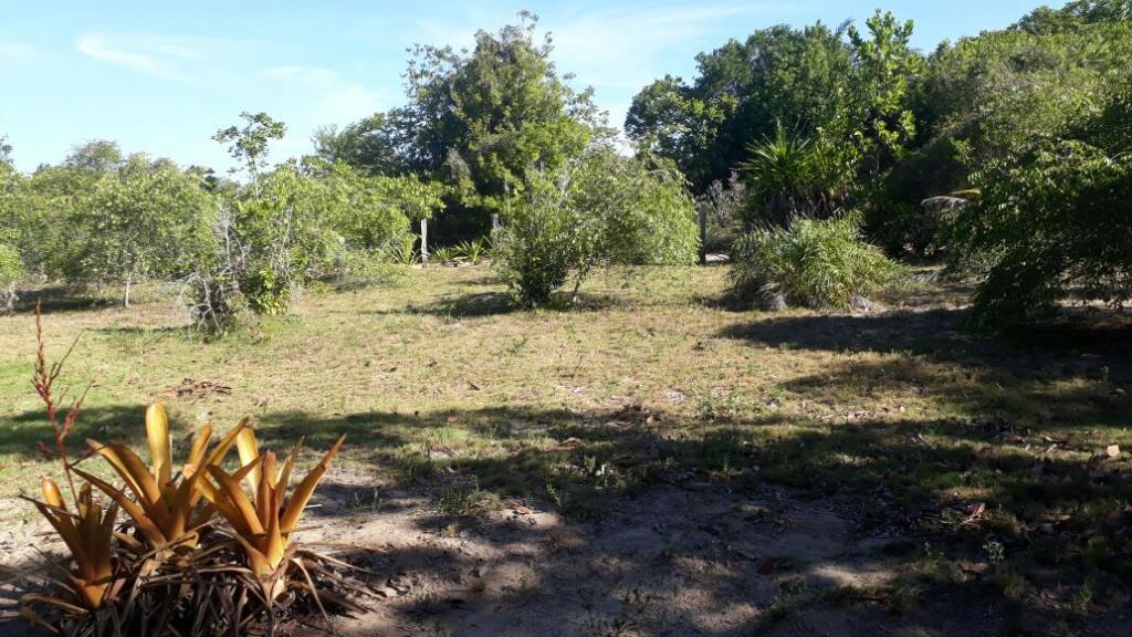 Terreno in vendita 1