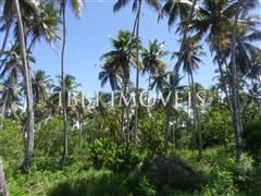 Terrenos Beira-Mar Em  10